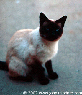 Lee - JDKs Cat! She lived from 1960 to 1985 (25 YEARS!) - Penn Valley, PA - 1971